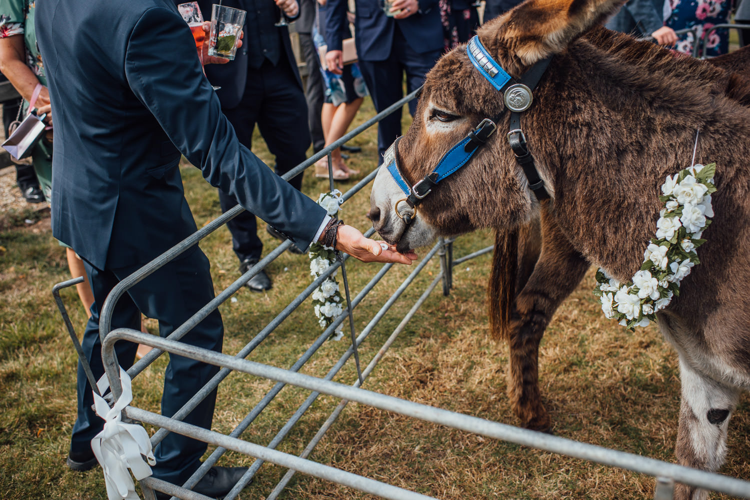 wedding donkeys in bohemian country wedding by the shannons photography